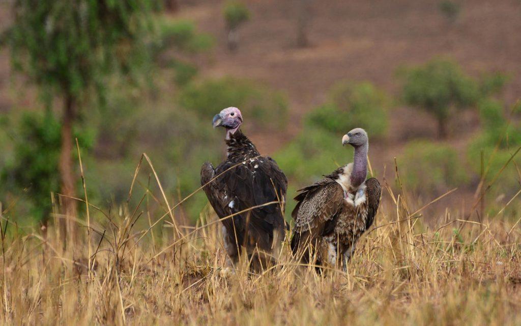 birding in uganda - birds in queen elizabeth national park