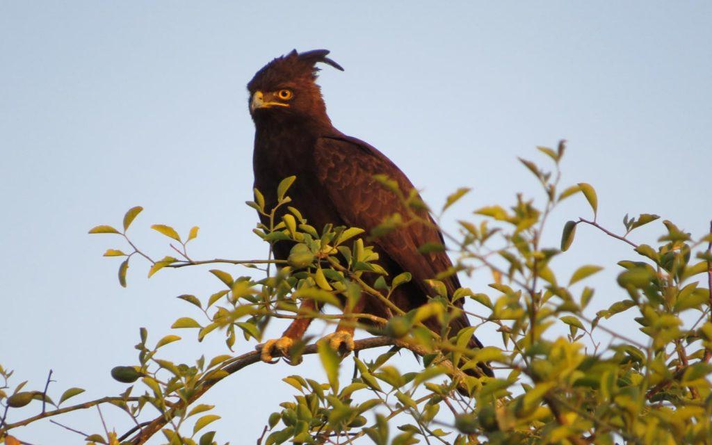birds of uganda - biding in lake mburo national park-Bird Watching