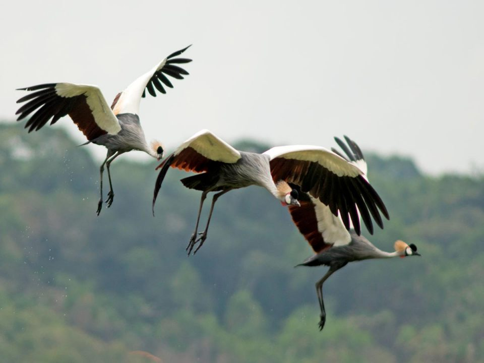 Uganda National Parks Adventure - ugandan birds- Lake Bunyonyi