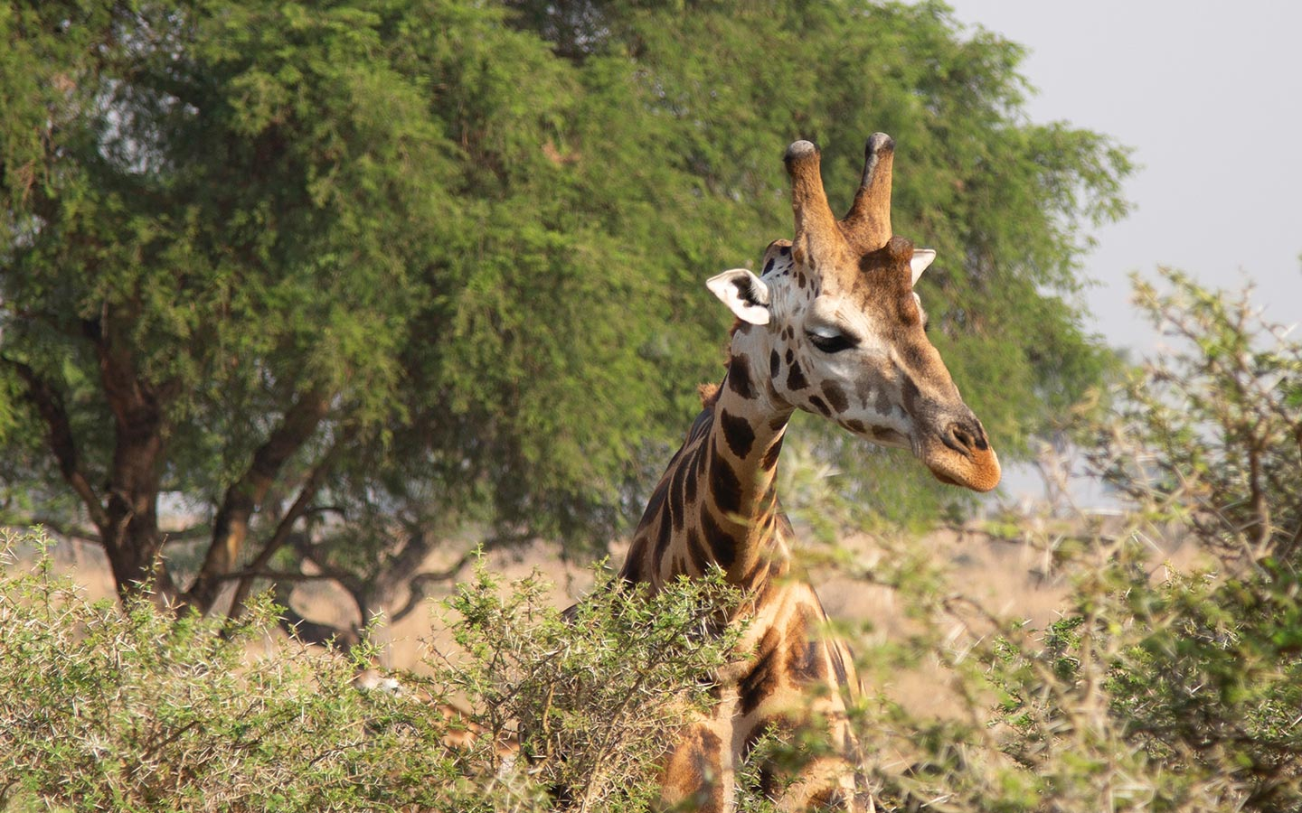 Wildlife Holiday Safaris - Murchison falls National Park