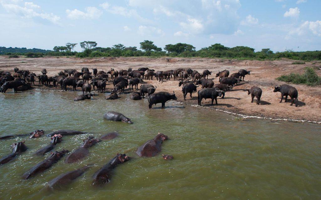 Uganda Safari Hoilday