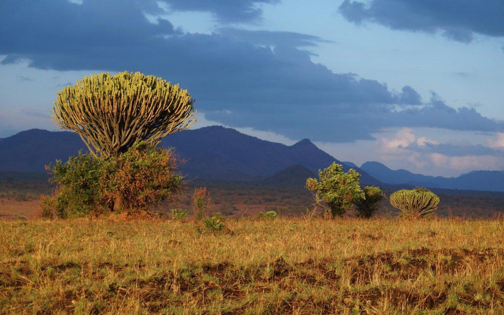 Kidepo Valley National Park - kidepo National park