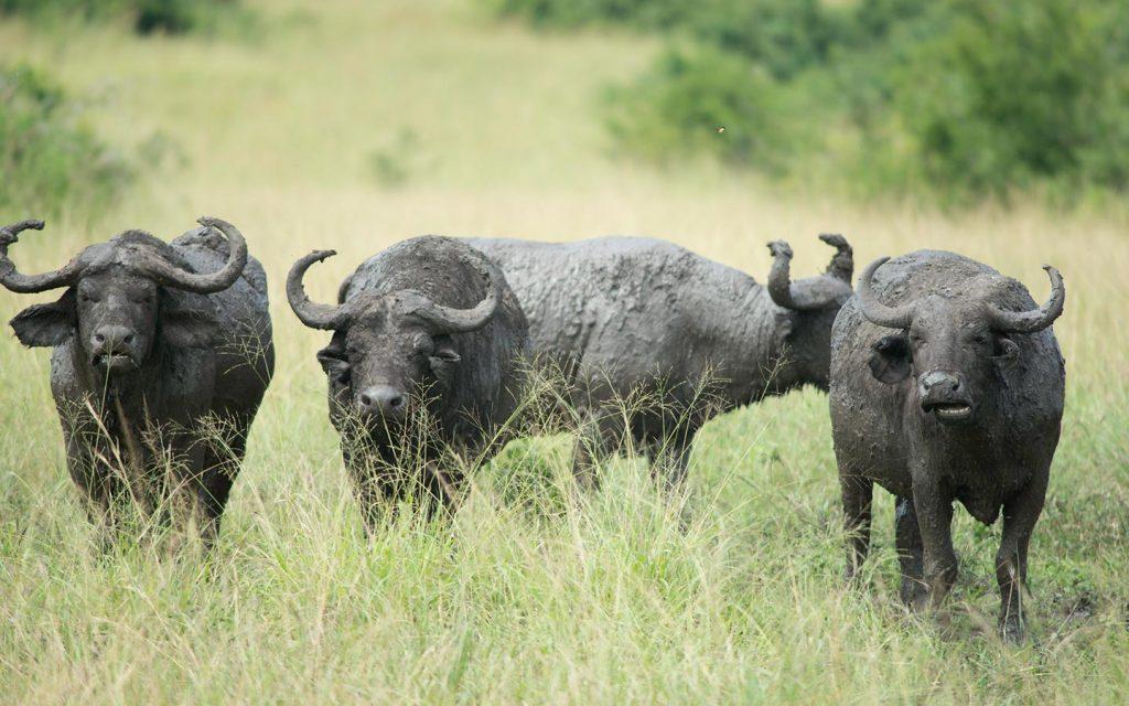 Uganda National Parks Adventure