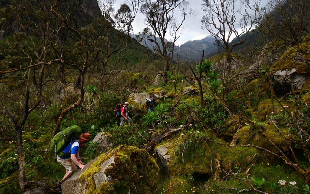 hiking mountain rwenzori