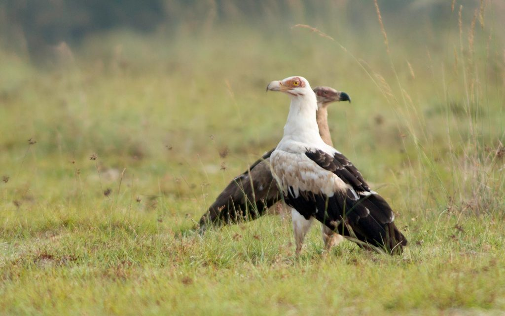 Uganda Gorilla and Wildlife Safari - birds in murchison-Bird Watching