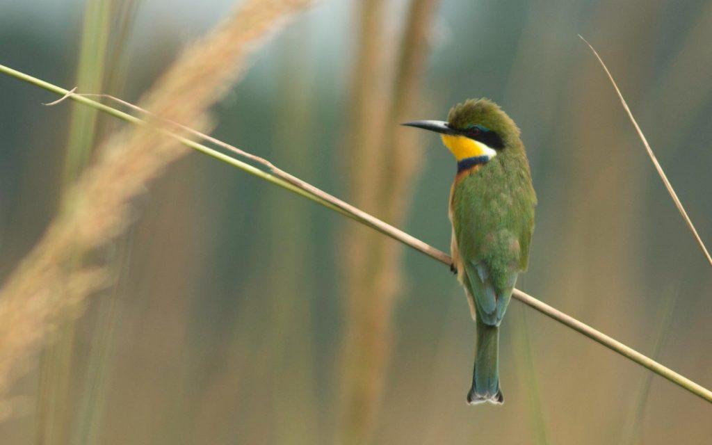 birds in lake mburo - kidepo birds - birds in mabira forest-Bird Watching