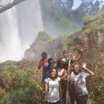 tree climbing lions, uganda tours, lake mburo, mgahinga gorilla national park, lions climbing trees, gorilla families, game safari, kyambura game lodge, best time to visit uganda, gorilla tour