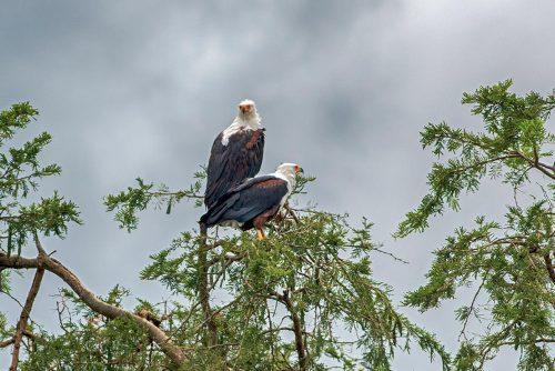 birding in Queen Elizabeth national park - birding and photography safari