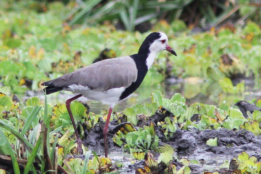 birdlife in lake mburo