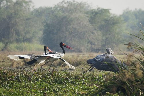8 Days Uganda Big 5 and Birding Safari