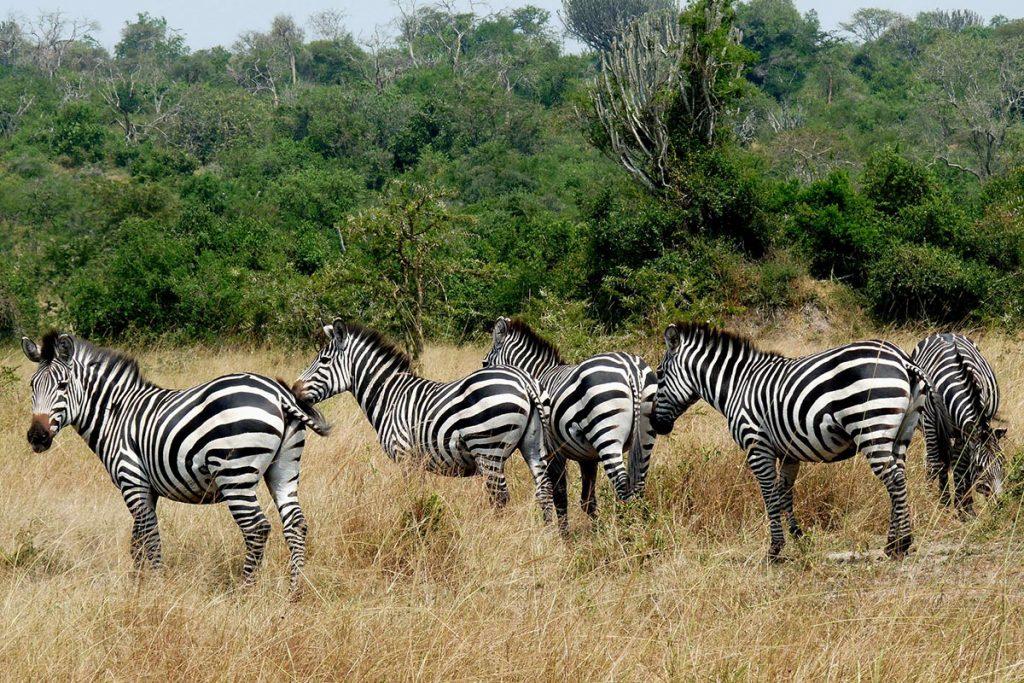 4 day lake mburo wildlife safari