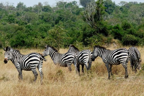 4 day lake mburo wildlife safari