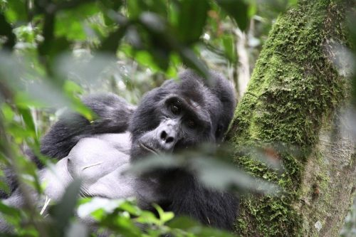 10 Days Uganda Gorillas, Wildlife and Birding Safari