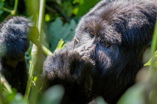 6 days gorilla and adventure safari