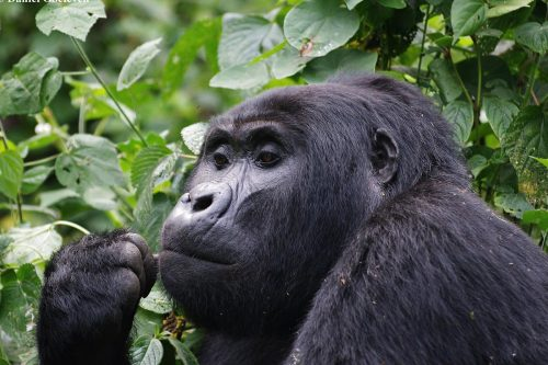 4 Day Wildlife and Gorillas In The Mist Safari