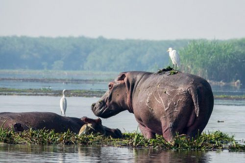 9 Days Uganda Wildlife Adventure Safari