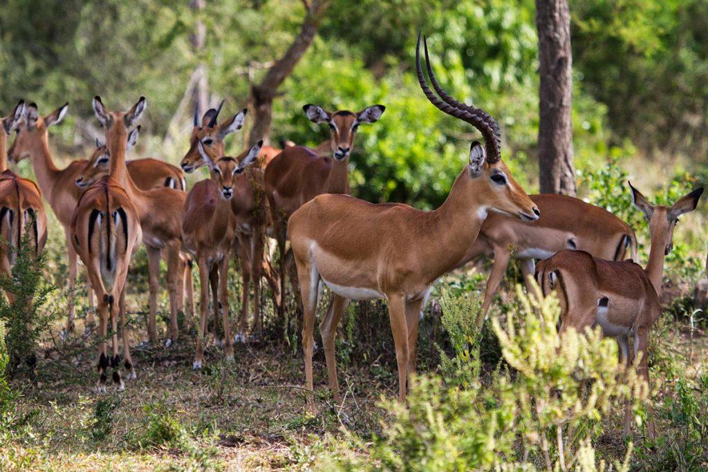 5 days queen elizabeth and lake mburo adventure safari