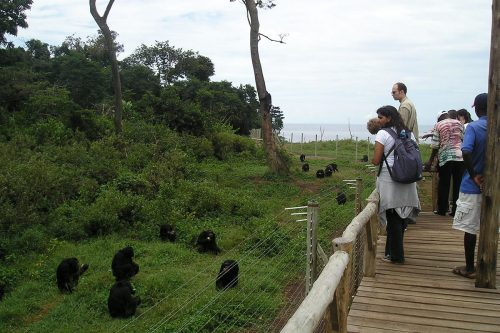 explore ngamba Island